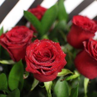 6 Fresh Red Roses